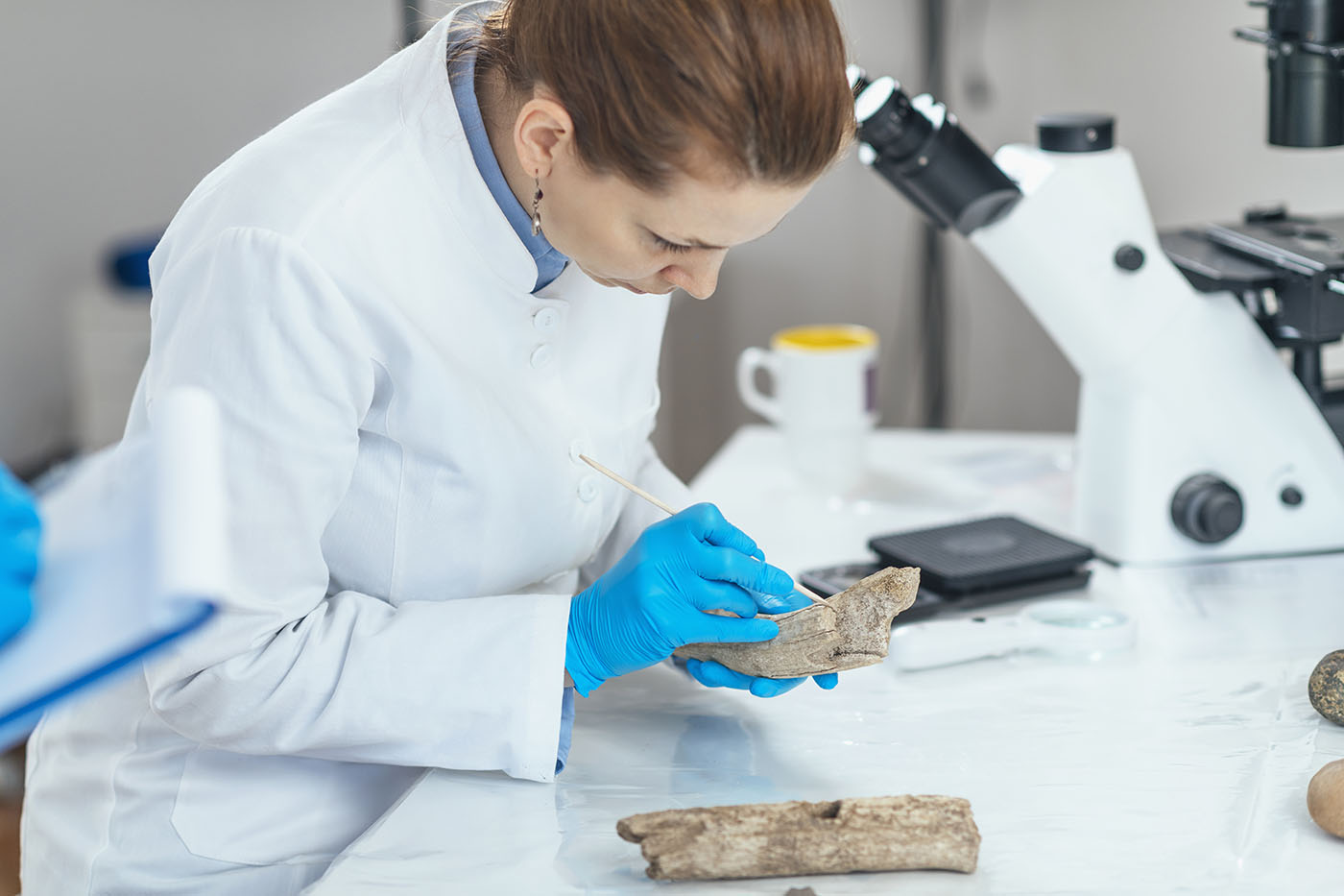 How To Become A Forensic Anthropologist Career And Salary Information